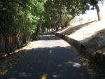 Shady Trail by Dam