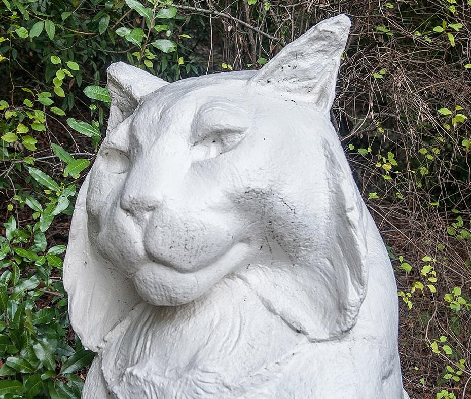 Cat smaller - Photos of Los Gatos