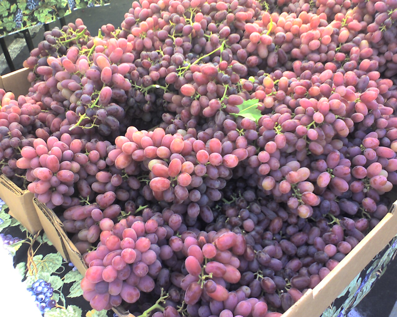 Red Grapes - Visit the Los Gatos Farmer's Market!