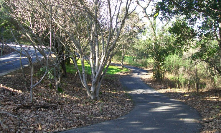 Beautiful paths and private driveways