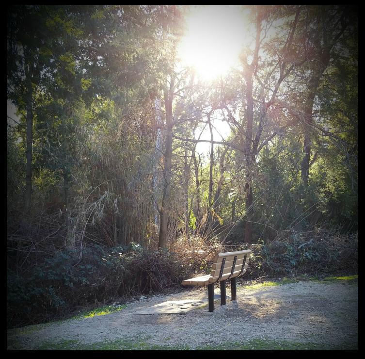 Park bench at Vasona, overlooking part of the Los Gatos Creek.