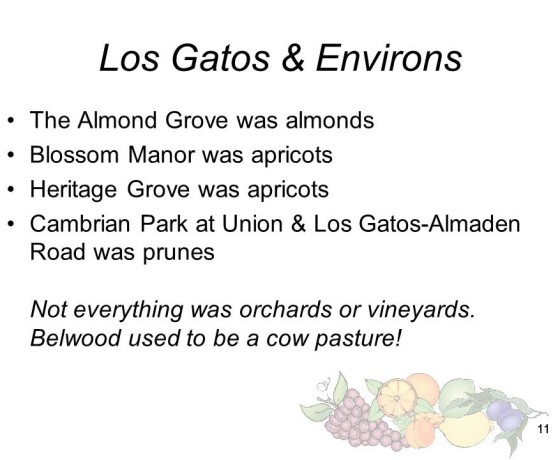 Slide11 560x460 - Saratoga and Los Gatos prune orchards - a piece of living history