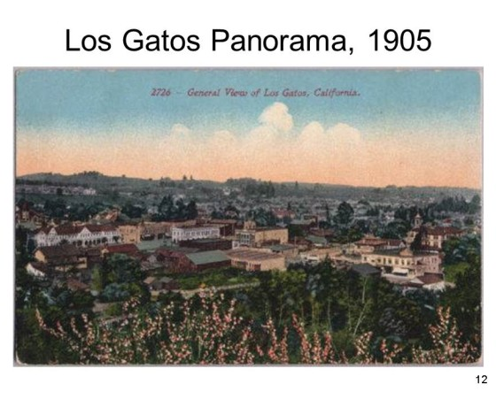 Slide12 560x460 - Saratoga and Los Gatos prune orchards - a piece of living history
