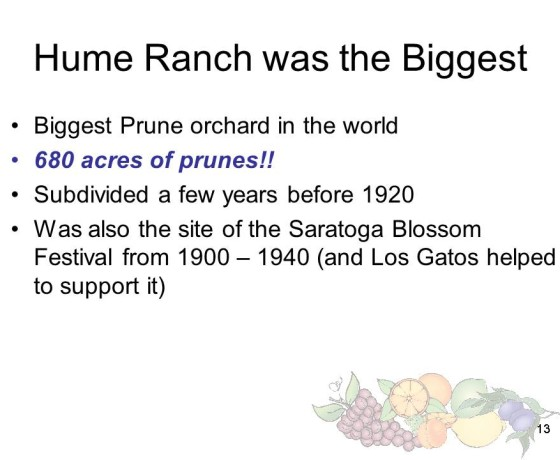 Slide13 560x460 - Saratoga and Los Gatos prune orchards - a piece of living history