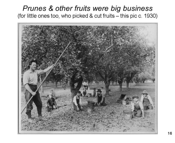 Slide16 560x460 - Saratoga and Los Gatos prune orchards - a piece of living history
