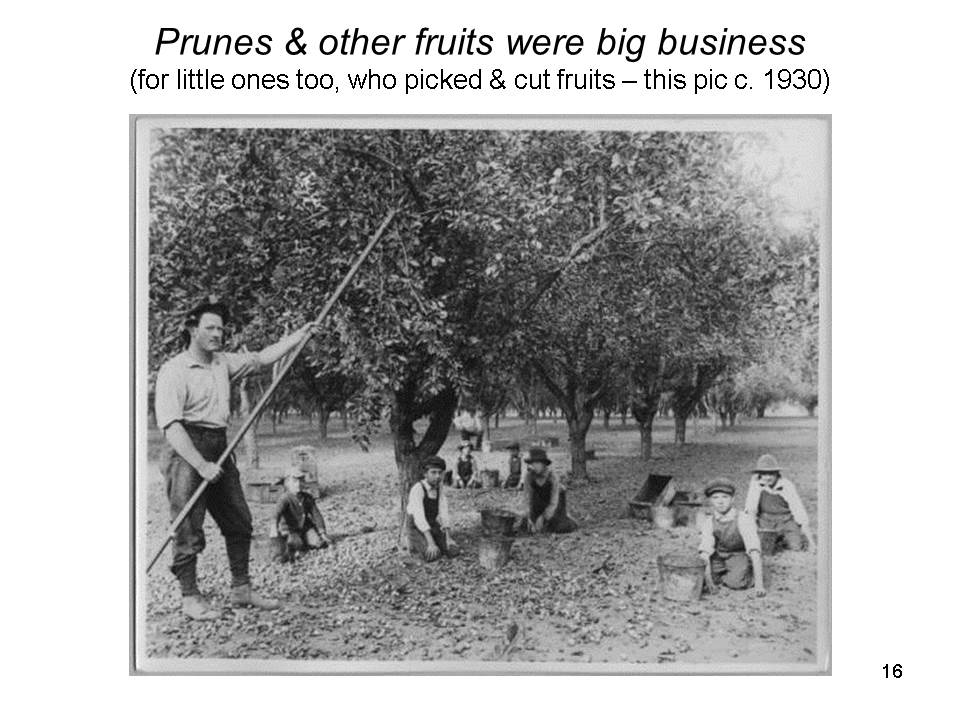 Slide16 - Saratoga and Los Gatos prune orchards - a piece of living history