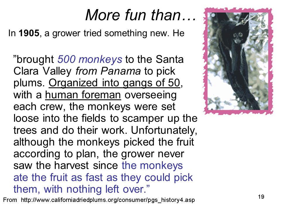 Slide19 - Saratoga and Los Gatos prune orchards - a piece of living history