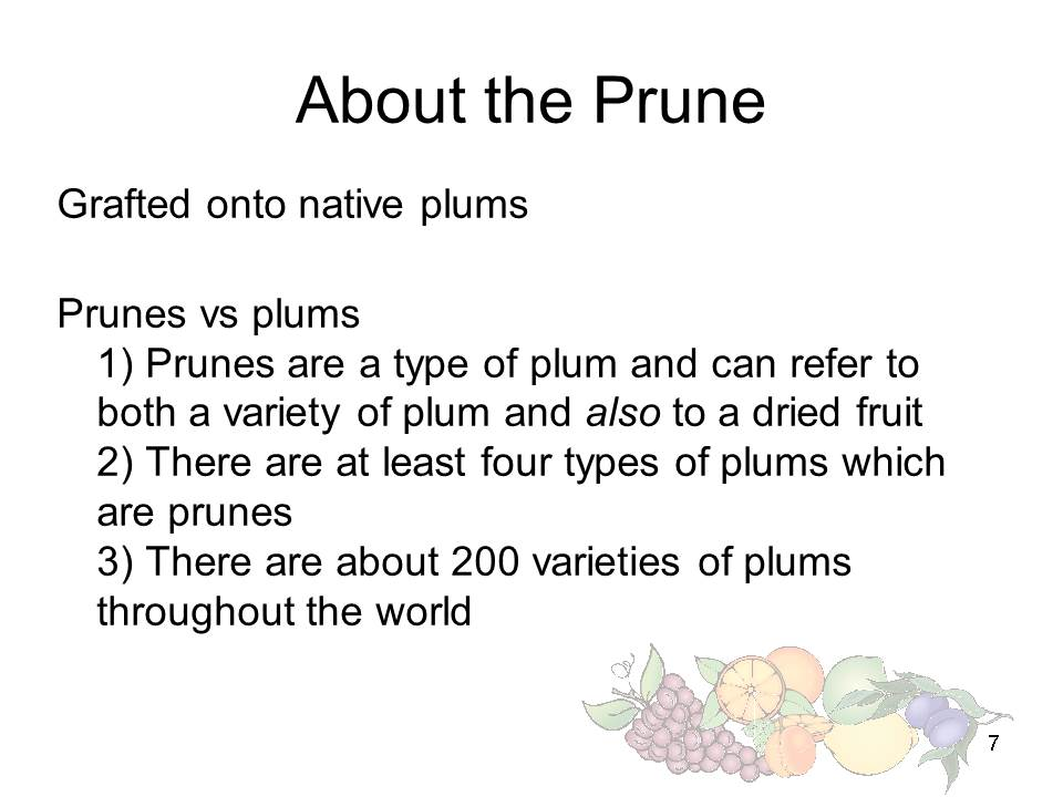 Slide7 - Saratoga and Los Gatos prune orchards - a piece of living history