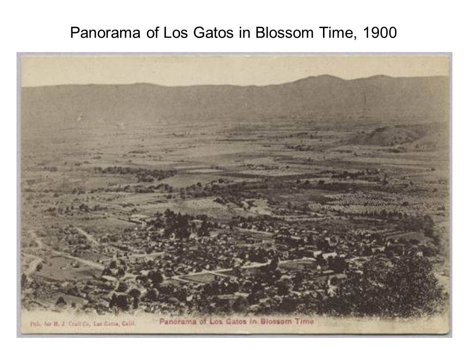 Slide8 - Saratoga and Los Gatos prune orchards - a piece of living history