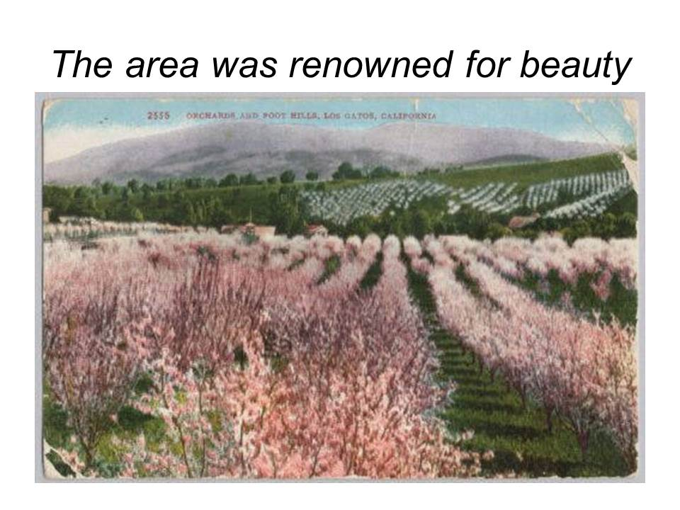 Slide9 - Saratoga and Los Gatos prune orchards - a piece of living history