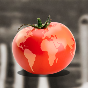 World Tomato Society logo