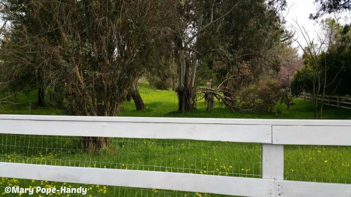 Loma Serena equestrian area