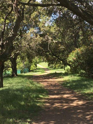 2020-03-26 Belgatos Park Trail 2