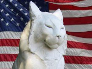 Patriot Cat Vote the Los Gatos Election
